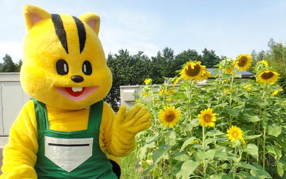 (加工~ブログ用)8月13日神在太陽光発電所のひまわりと元気君
