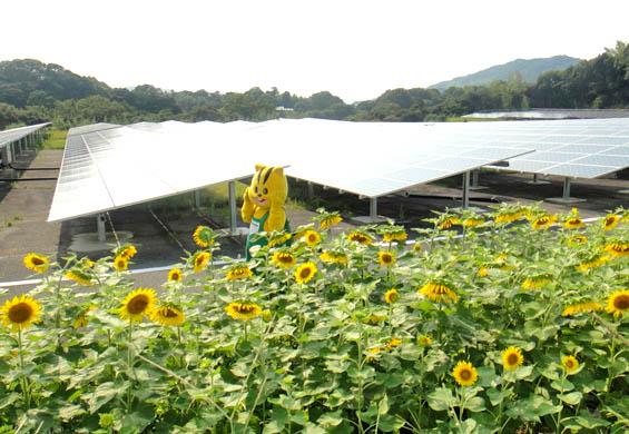 (加工~ブログ用)8月13日神在太陽光発電所をお散歩中の元気君A