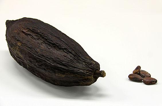 カカオの実(左)と中に入っている豆(右)。この豆からチョコレートができるんだって