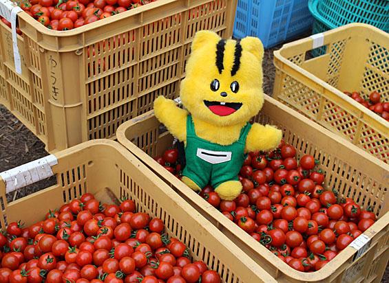 ミニトマトと元気くん