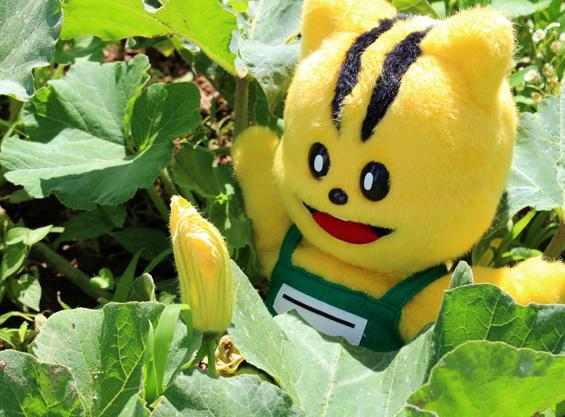 南瓜の花と元気くん