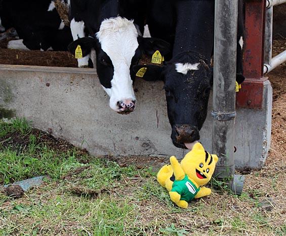 わぁ!牛さんになめられちゃった!くすぐったいよ!