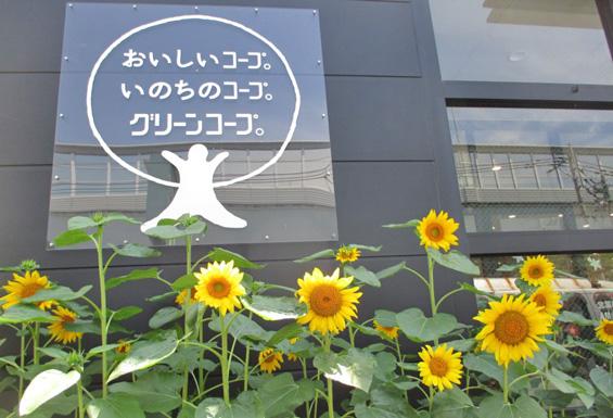 191122_himawari_p_06