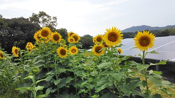 191122_himawari_p_07